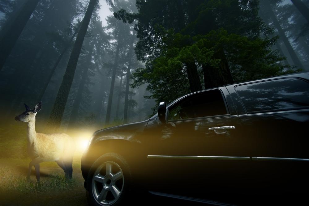 Srnka pred autom v noci